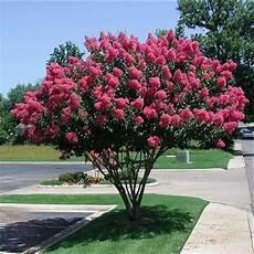 arbre qui pousse vite notre top 10 des arbres 224