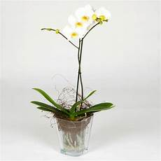 orchidea vaso trasparente carey s flowers since 1912 are all orchids to grow