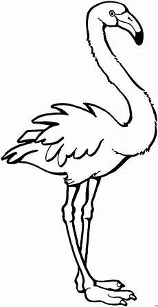 Malvorlage Flamingo Einfach Anmutiger Flamingo Ausmalbild Malvorlage Tiere