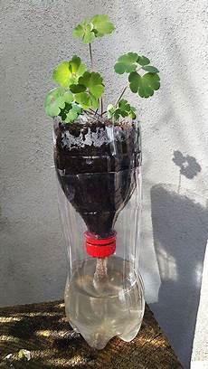 pflanzen während urlaub bewässern pet flasche als bew 228 sserung f 252 r pflanzen samen aussaat