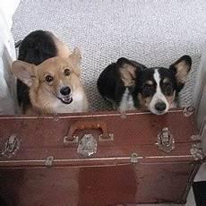 famille d accueil pour chien pendant les vacances faire garder chien pendant les vacances zoom sur la famille d accueil voyager et jouer