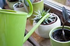 comment arroser ses plantes pendant les vacances entretenir ses plantes d eau d int 233 rieur en janvier