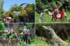 Berlibur Ke Taman Safari Marine Park Bali Desain