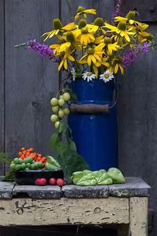 images gratuites plante fleur pot printemps vert