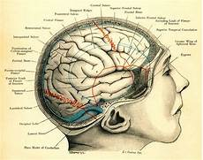 wire refers to new neural connections being created within the brain it can be used in