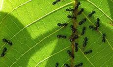 ameisen im garten ameisen im garten selbst de