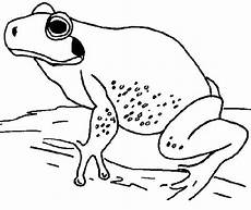 Malvorlage Frosch Oben Frosch Malvorlagen Malvorlagen1001 De
