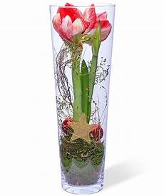 weihnachtliche deko im glas amaryllis im glas jetzt bestellen bei valentins