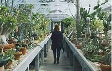 Welche Pflanze Produziert Am Meisten Sauerstoff - pflanzen im schlafzimmer schlaf gut in deinem gr 252 nen