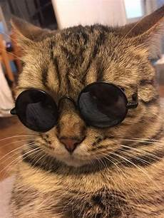 Katze Mit Sonnenbrille - cats in sunglasses pictures david simchi levi