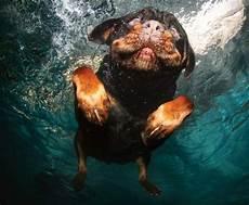 Malvorlagen Unterwasser Tiere Lustig Hund Unter Wasser 169 Wenn Hunde B 252 Cher 252 Ber Hunde