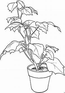 gratis malvorlagen blumen pflanze in kleinem topf ausmalbild malvorlage blumen
