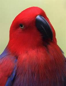 animale vanitoso les 2773 meilleures images du tableau perroquet et oiseaux