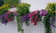 terrazzo fiorito tutto l anno balconi e terrazzi fioriti giardini dinamici