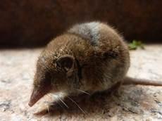 Mäuse Im Haus - eine kleine maus korbach myheimat de