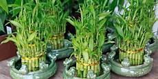 Incorporating Feng Shui Plants Into Your Home The Right
