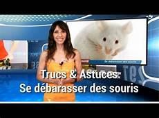 comment se débarrasser des rats trucs et astuces se d 233 barasser des souris