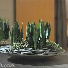 pflanze mit i this flowers and plants deko ideen pflanzen deko