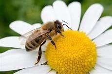 Malvorlage Biene Und Blume Biene Und Die Blume Stock Image Image Of Wald Arbeiten