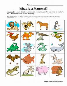 animal worksheets for toddlers 14272 mammal classification worksheet teaching