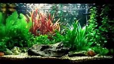 updated juwel 125 tropical aquarium