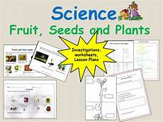 plants lesson ks1 13726 plants that flower and cycle of a sunflower and bean plant reception keystage 1 science