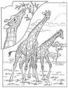 Ausmalbilder Tiere Afrika Kostenlos Afrika Baum Malvorlage Coloring And Malvorlagan