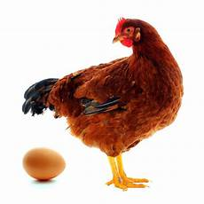Duluan Mana Ayam Atau Telur Riddle Bahasa Indonesia