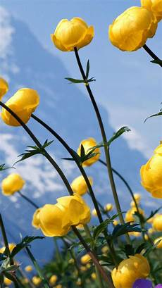 yellow flower wallpaper iphone flower iphone wallpapers top free flower iphone