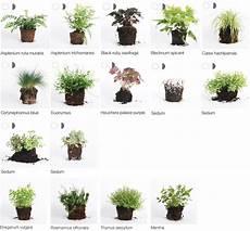 geeignete pflanzen wandbegr 252 nung wandbegr 252 nung