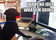 i have no idea how i do it image 308125 i have no idea what i m doing know