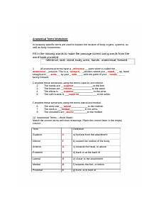 anatomicaltermsworksheet doc health science 20 mr b banerjee anatomical terms worksheet name