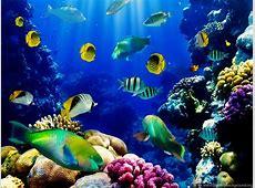 3d Live Fish Wallpapers Fish Tank Live Wallpaper. Fish