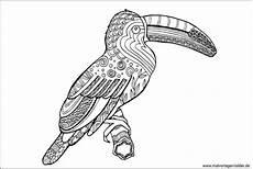 Ausmalbilder Erwachsene Vogel Vogel Bilder Zum Ausdrucken Vorlagen Zum Ausmalen Gratis