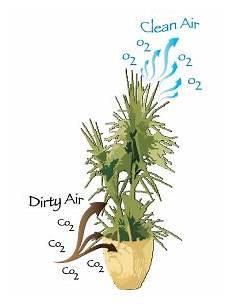 alpha botanical air rx mission statement