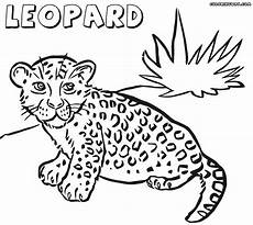 leopard coloring pages coloring pages to and print