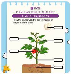types of plants worksheets for grade 1 13701 evs class 1 worksheets for free and start learning