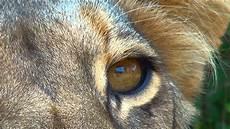 animal en g 30218 kenia 3d reino animal estreno en maloka