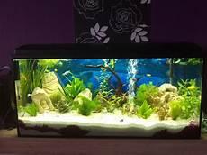 welche fische passen zusammen aquarium wasserschildkr 246 ten und fische zusammen im aquarium