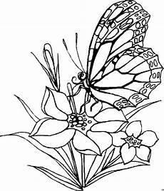 Ausmalbilder Blumen Schmetterlinge Schmetterling Frisst Aus Bluete Ausmalbild Malvorlage