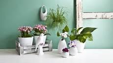 vasi colorati per piante dalani vasi per fiori eleganti oggetti decorativi