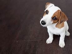 hund ja oder nein leptospirose impfung beim hund impfen oder nicht