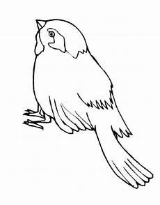 Malvorlage Vogel Spatz Ausmalbilder F 252 R Kinder Spatz 5