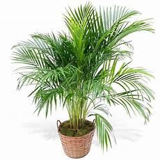 10 plantes d 233 polluantes pour am 233 liorer votre int 233 rieur