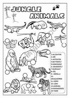 jungle animals worksheet esl worksheet by ineta