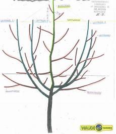 apfelbaum schneiden wassertriebe obstbaumschnitt
