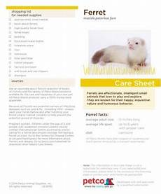 ferret care sheet interactive habitat magazines online habitat magazine publishers at fliphtml5 com