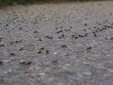 ameisenbekämpfung im haus ameisenbek 228 mpfung in hamburg ihr kammerj 228 ger killfix