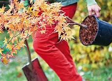 quand planter des arbustes quand planter quoi au jardin