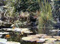 Steingarten Mit Teich - gartenteich teichbau bachlauf koiteich gartengestaltung
